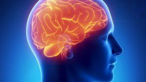 brain-300x169